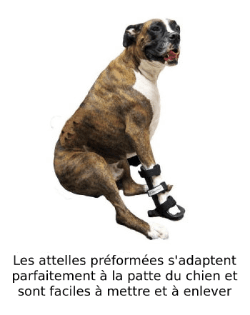 Attelle préformée pour immobilisation de la patte du chien