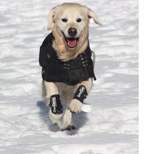 Chien avec manteau imperméable thermique