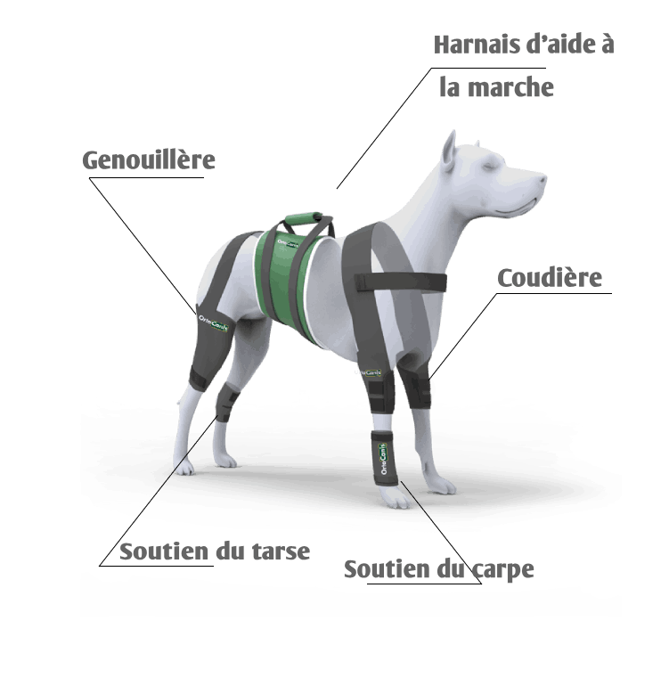 Protecteurs articulaires orthopédiques pour chien