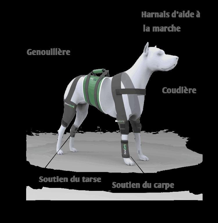 Solutions orthopédiques pour chien