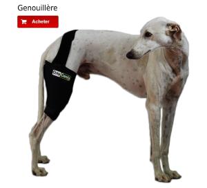Genouillère pour chien