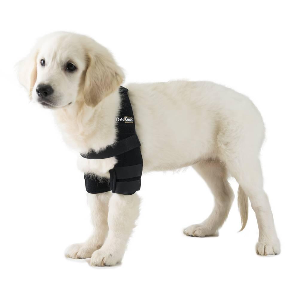 Ortesis de codo para perros con artrosis, higromas o callos