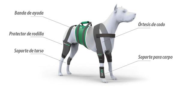 artrosis perro