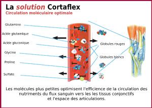 Graphique 2 Cortaflex