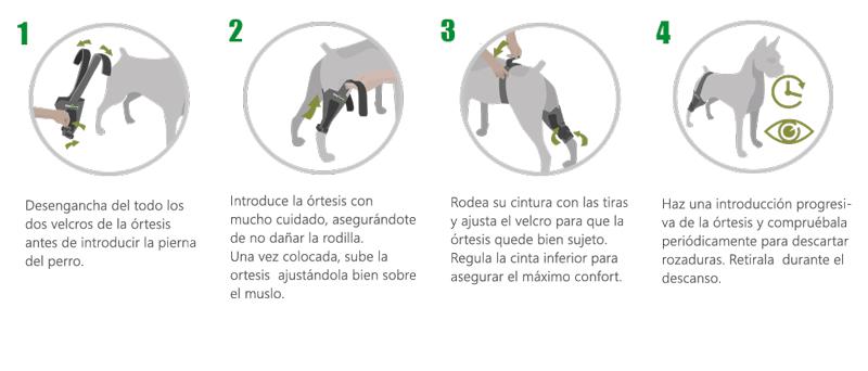 instrucciones órtesis de rodilla articulada