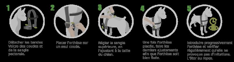 instructions Coudière pour chien Ortocanis.com