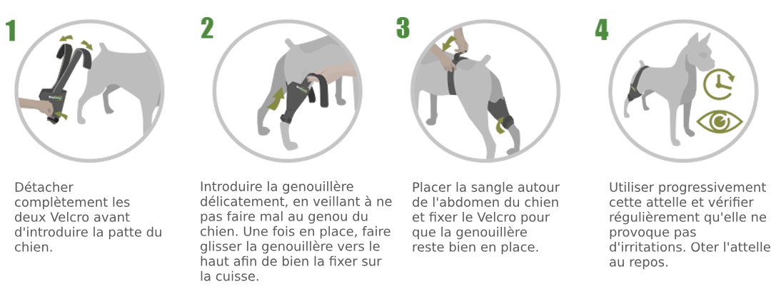 genouillère sur mesure pour chien