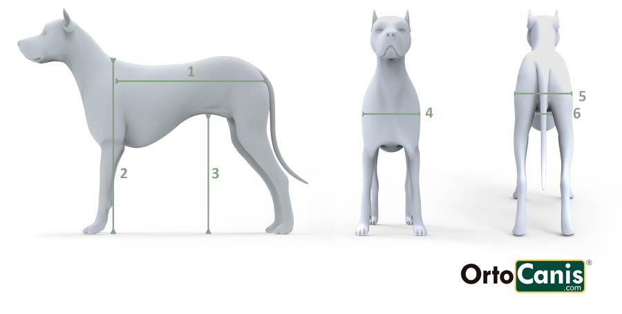 Silla de ruedas a medida para perro